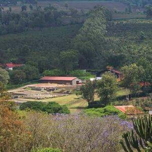 Mondul Coffee Estate
