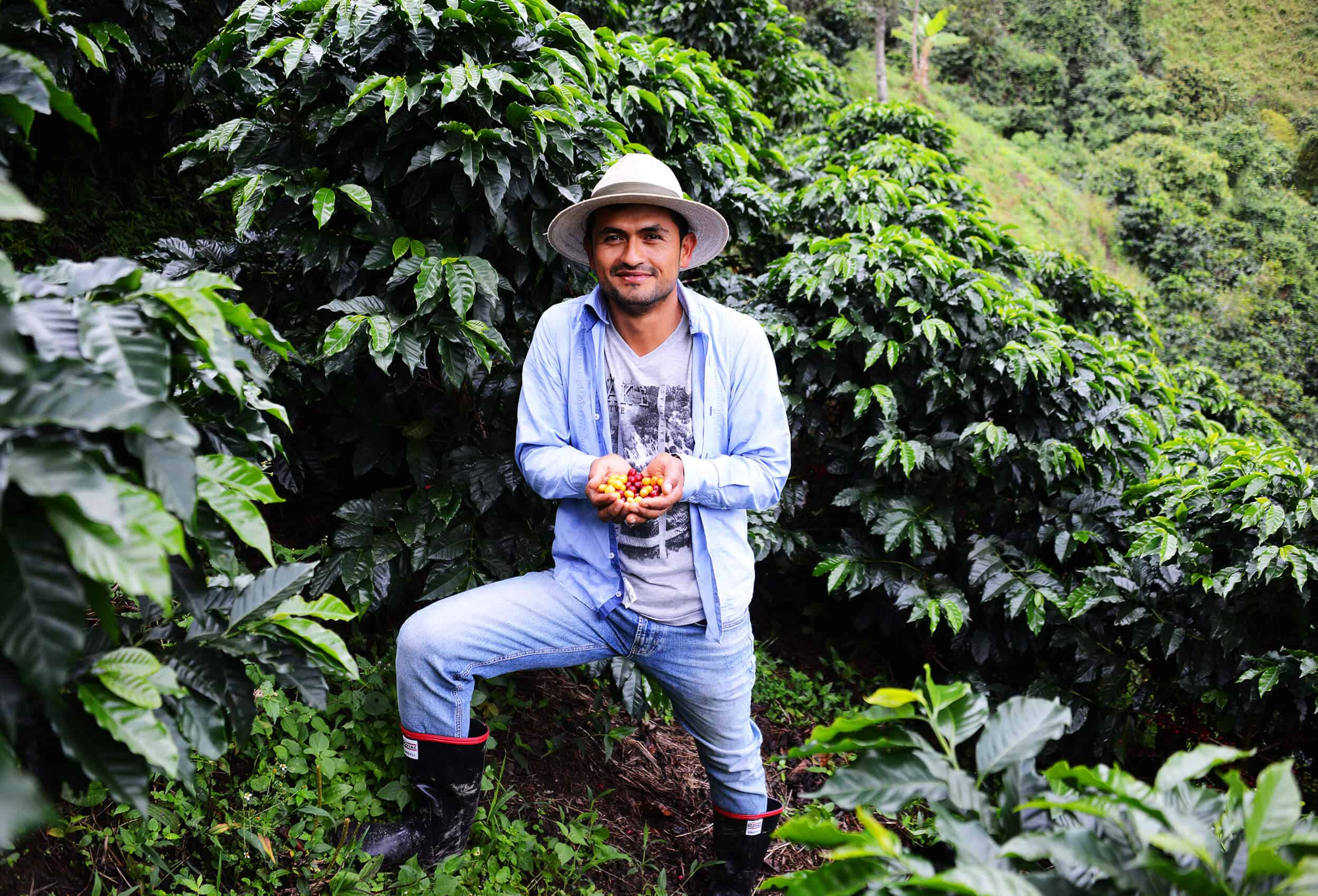 coffee farmer from colombia showing coffee cherries