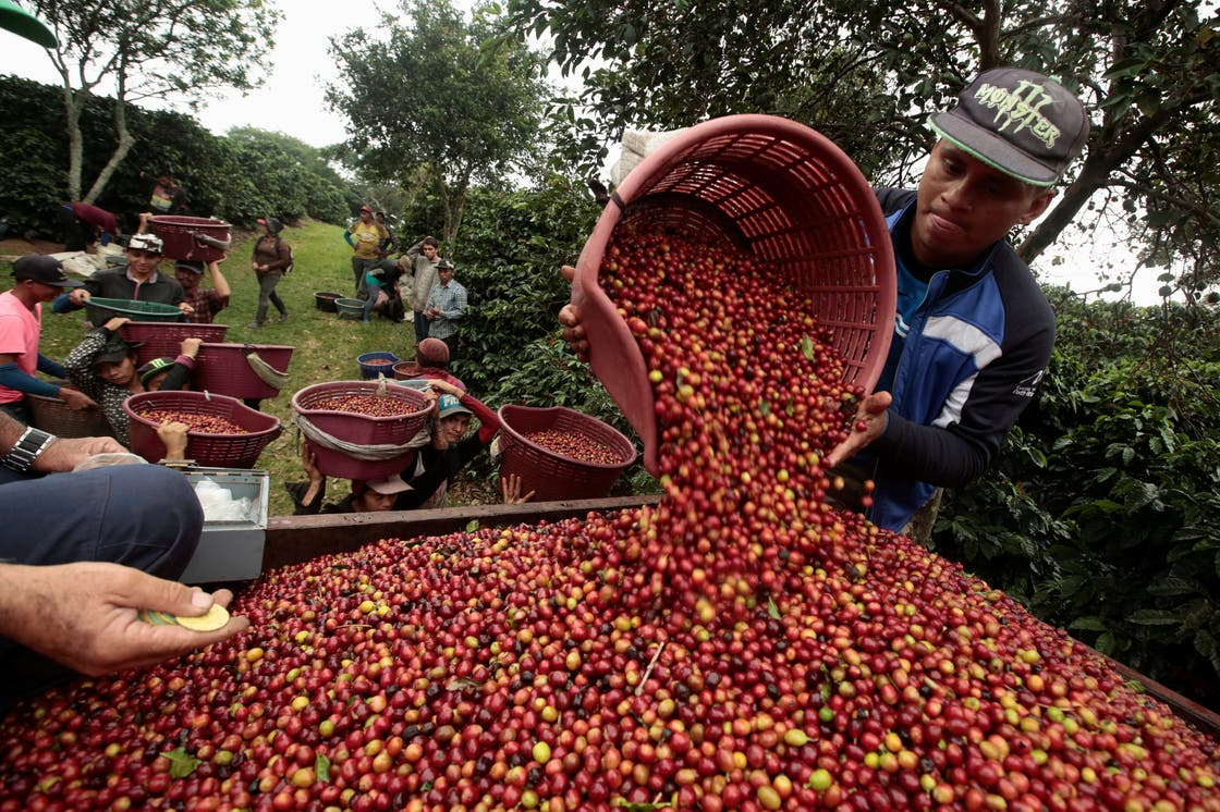 coffee farmer pouring coffee in guatemala