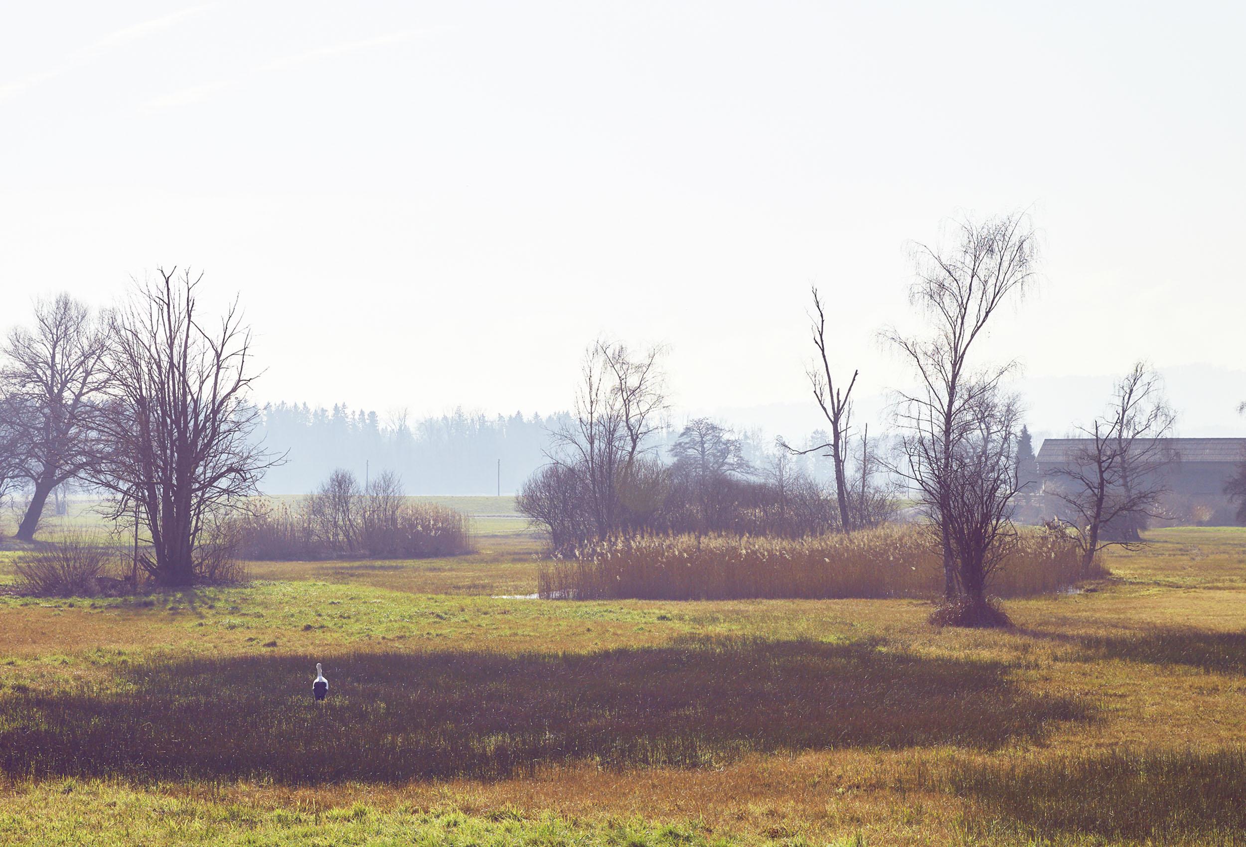 swamp with stork on farm birkenhof in uster switzerland