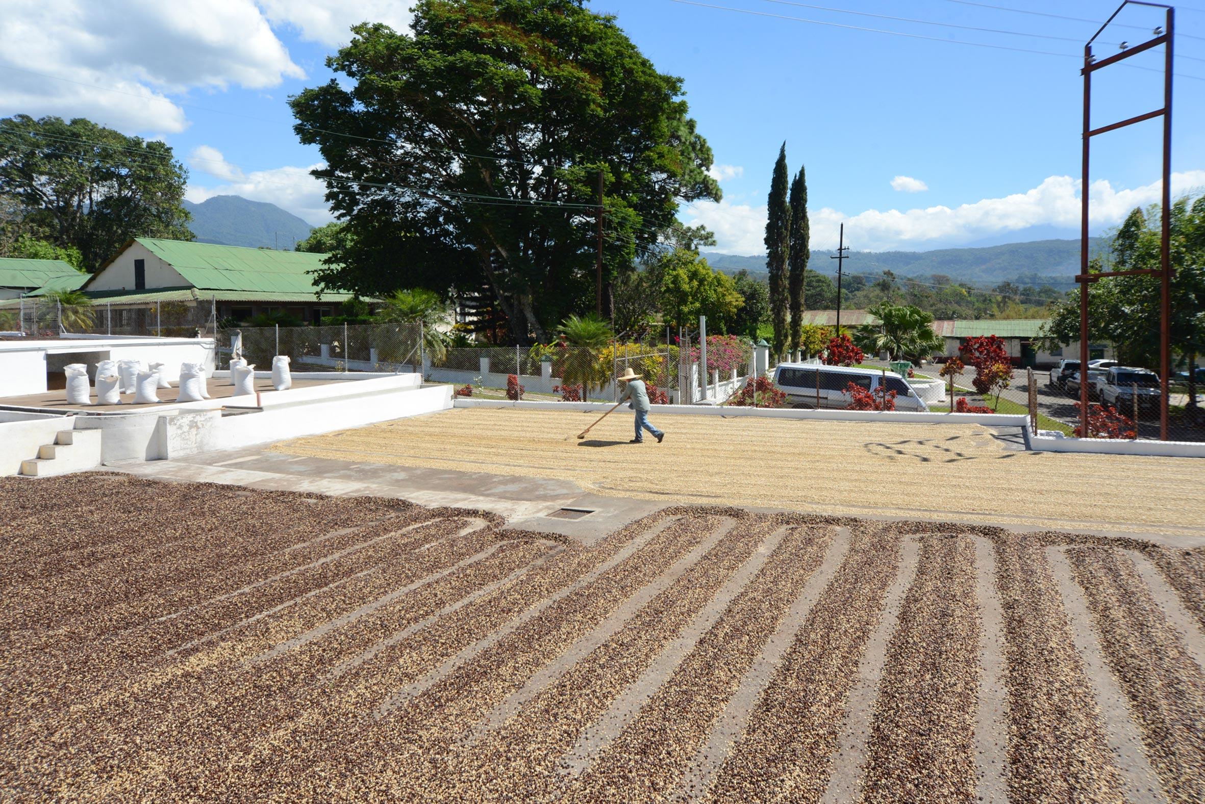 drying fields guatemala san jeronimo