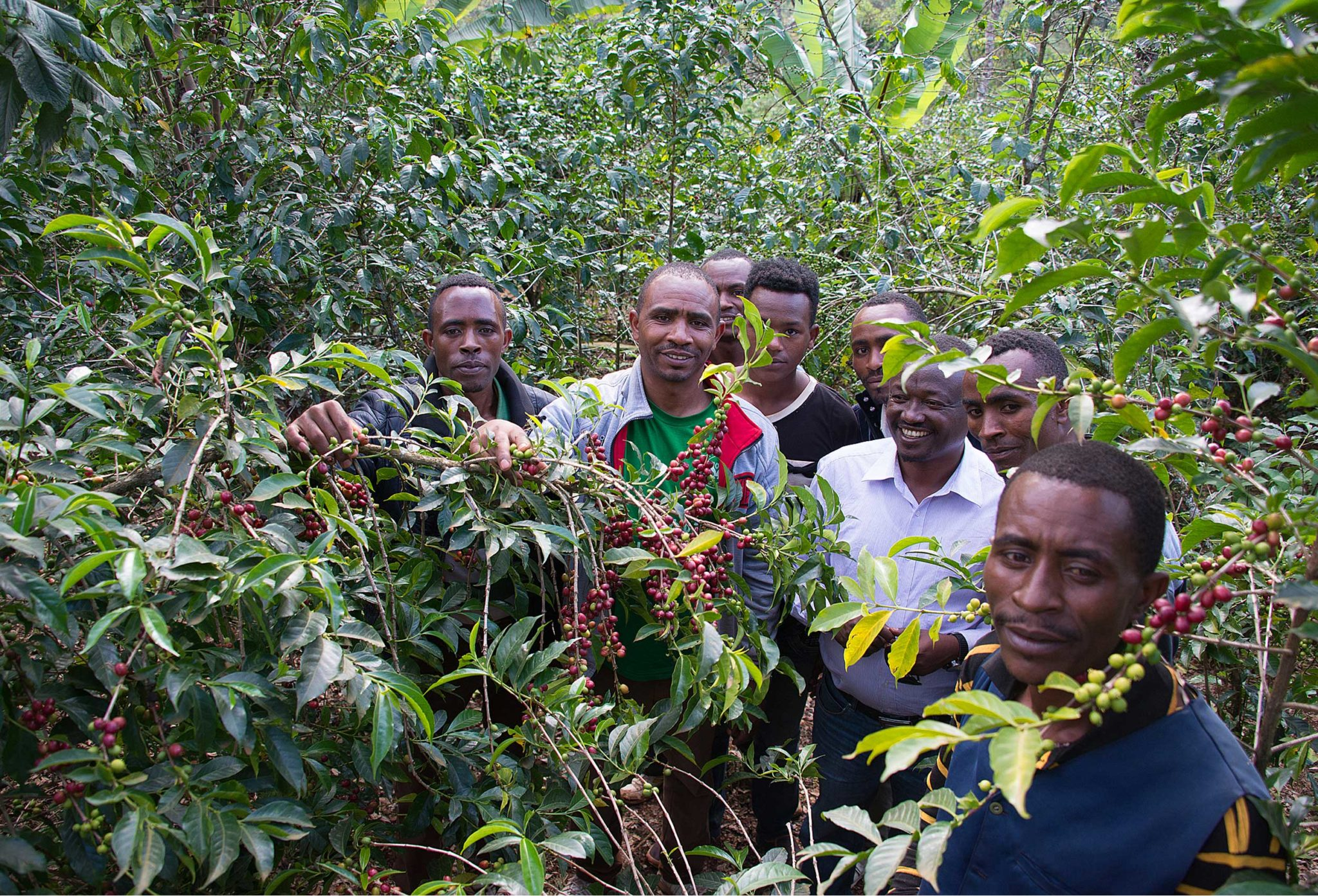 This image alemayehu and family on their coffee farm is for visual improvements for page Die Wurzeln von Miju