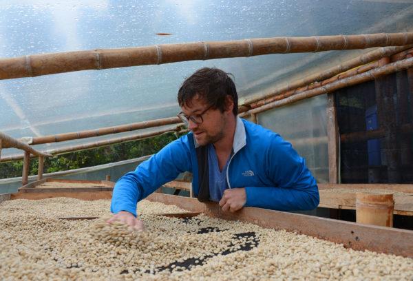 Simon turning coffee that needs to dry