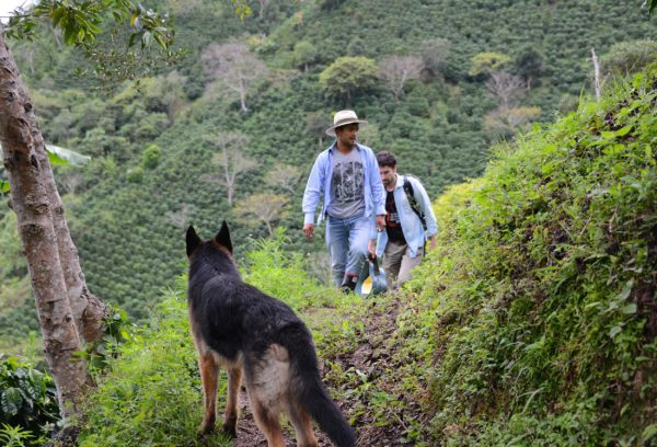 Oscar and ViCAFE climbing the hills of Finca Los Nogales