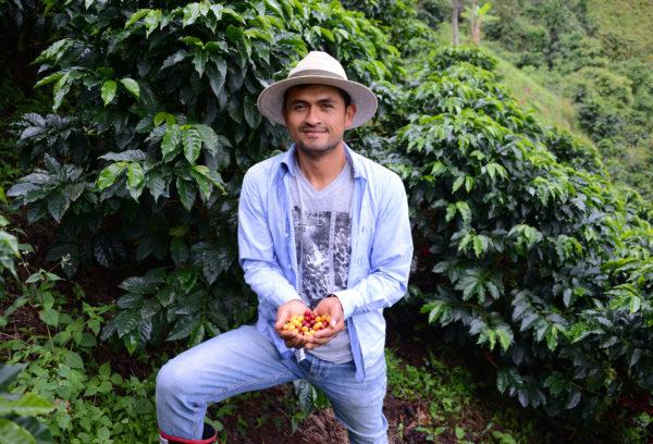 Oscar showing coffee cherries